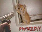 Owned - Kitty